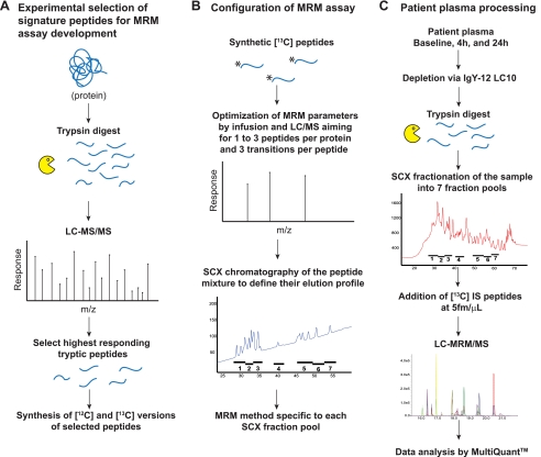 Quantification of cardiovascular biomarkers in patient plasma by targeted mass spectrometry and stable isotope dilution.